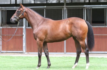 Regal Bloodstock selling shares in a Cracking Medaglia D'Oro filly from Premier Sales!
